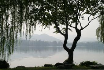 Il miracolo degli alberi di Hiroshima