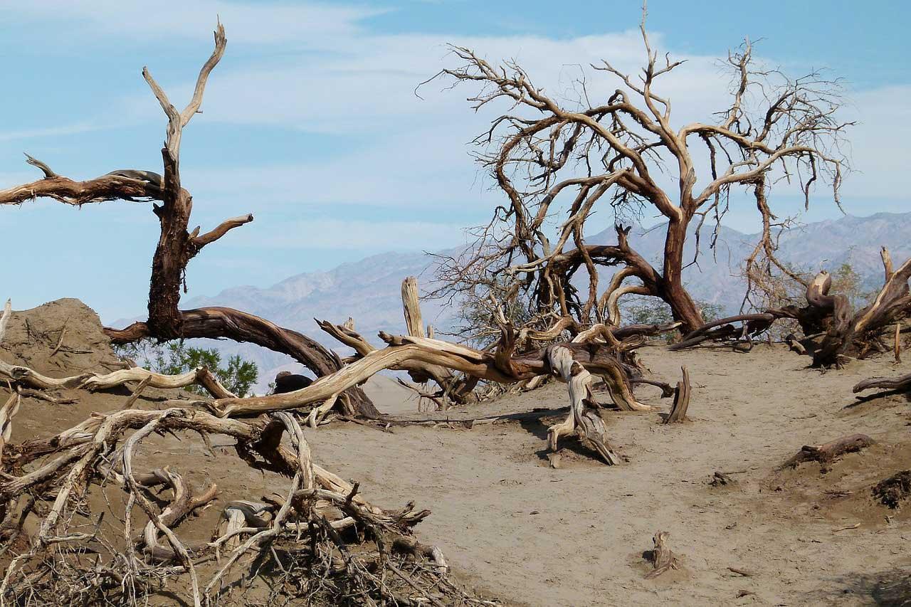 alberi-antichi